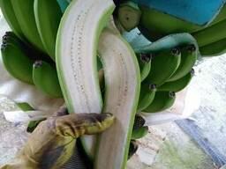 Банан Cavendish оптом из Эквадора - photo 3