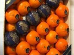 Мандарины.Прямые поставки из Испании.