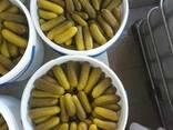 Marinuoti agurkai (fermentuoti). - фото 2