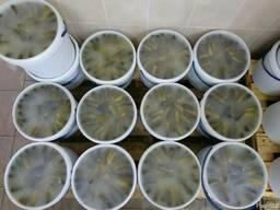 Marinuoti agurkai (fermentuoti). - фото 3