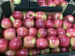 Польское яблоко от производителя La-Sad - фото 3