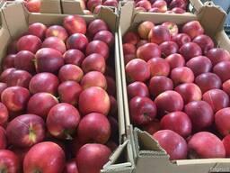 Польское яблоко от производителя La-Sad - фото 4