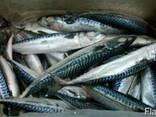 Свежемороженная рыба - фото 2