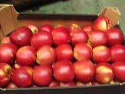 Яблоки из Польши! Apples from Poland! - фото 3