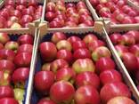 Яблоки из Польши! Apples from Poland! - photo 7