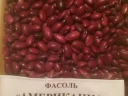 Фасоль оптом Красная, белая, цветная из Киргизии - фото 6