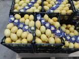 Лимон Цитрусовые - photo 3