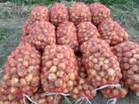 Овощи - фото 1