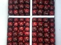 Овощи и фрукты из Таджикистана и Узбекистана