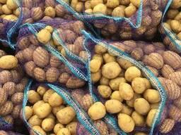 Parduosiu bulves (картофель) urmu