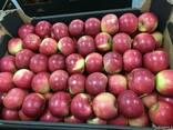 Польское яблоко от производителя La-Sad - фото 1
