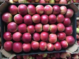 Продам яблоки из Польши