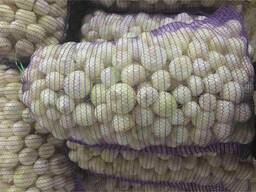 We sell peeled onions, caliber 40-80.